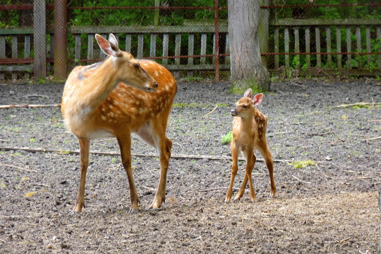 Зоопарк в Большереченске
