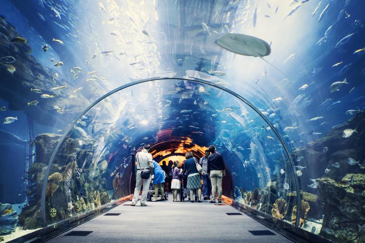 Океанариум в ТРЦ Дубай Молл