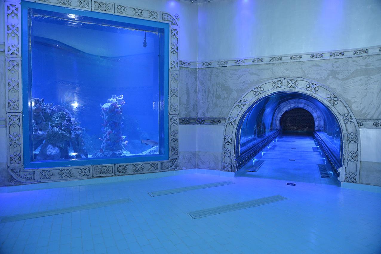 Уникальный аквариум