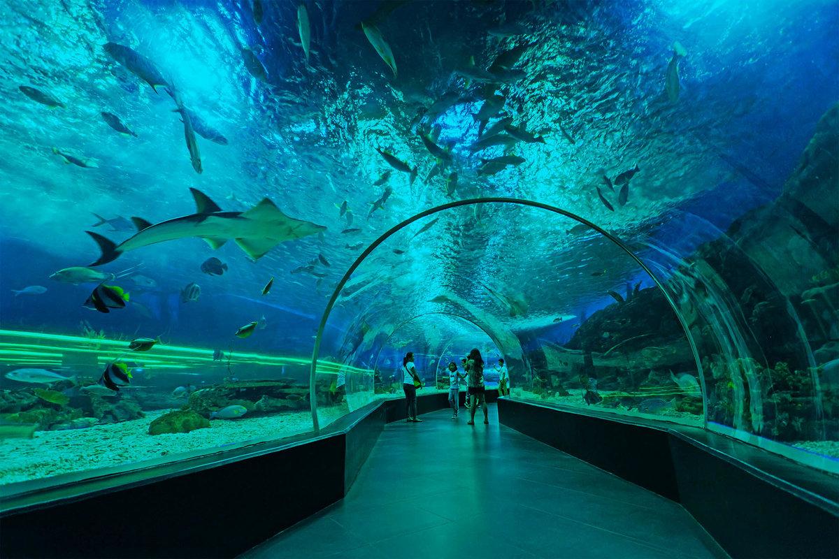Манильский океанариум